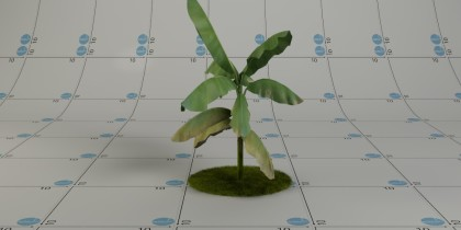 pianta-foglielarghe