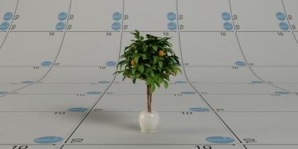 pianta arancio